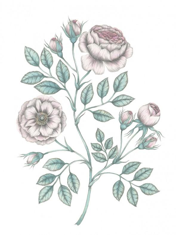 Rose-web700