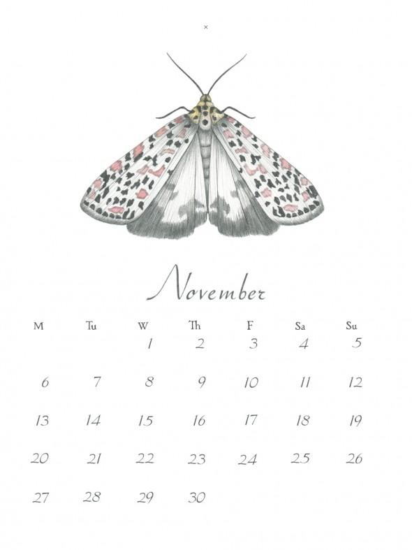 11-November2017stor