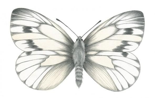 Fjäril-klar